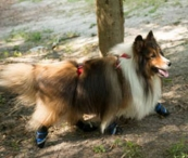 Win A Snuggy Boots Suspender System For Your Dog - caninecareproducts.com