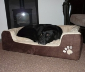 Win a Home Essence Veterinary Pet Bed from Wayfair.co.uk - Sixtyplusurfers