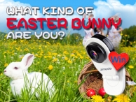 Take our Easter Quiz for your chance to win a Zmodo EZCam and $50 coupons! - Zmodo Technology Co.