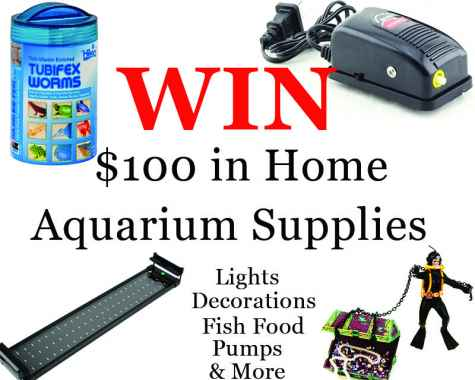 $100 Build Your Epic Aquarium Sweepstakes - Epic Aquariums
