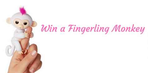 Fingerling Baby Monkey Giveaway - Blogging Rubbish