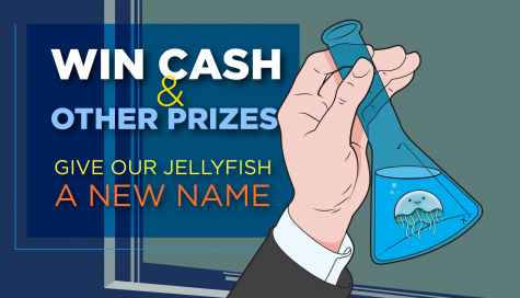 Name our Jellyfish Contest & Win Cash Plus Other Prizes - The Gadget Flow