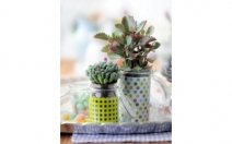 Win The Houseplant Of The Month Plus £450 National Gardening Vouchers - comps.whatsontv.co.uk