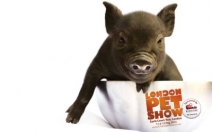 Win a Family Ticket to the London Pet Show at Earls Court Two on 11 & 12 May 2013 - comps.womansweekly.co.uk